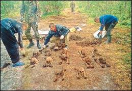 Поисковики из Новосибирска отыскали около 99 погибших воинов ВОВ
