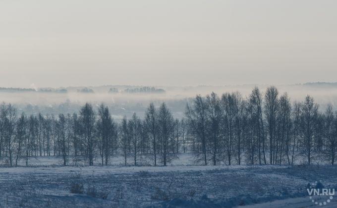 Прокуроры защитили отвырубки лес систорией «внесколько тысячелетий»