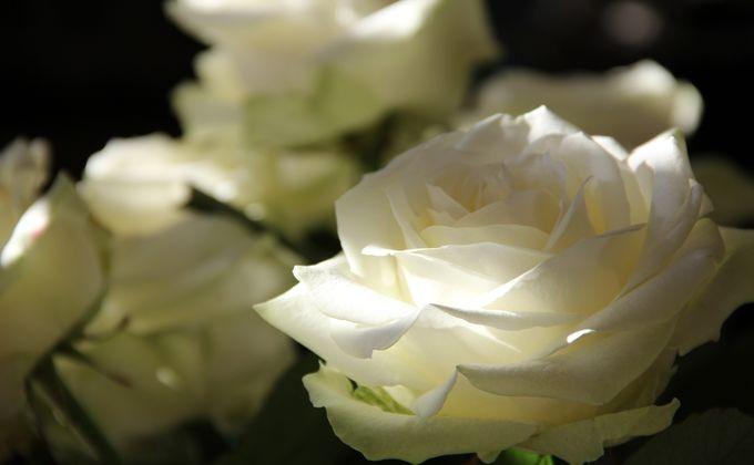 Мошенники изНовосибирска собрали заказы нацветы и пропали