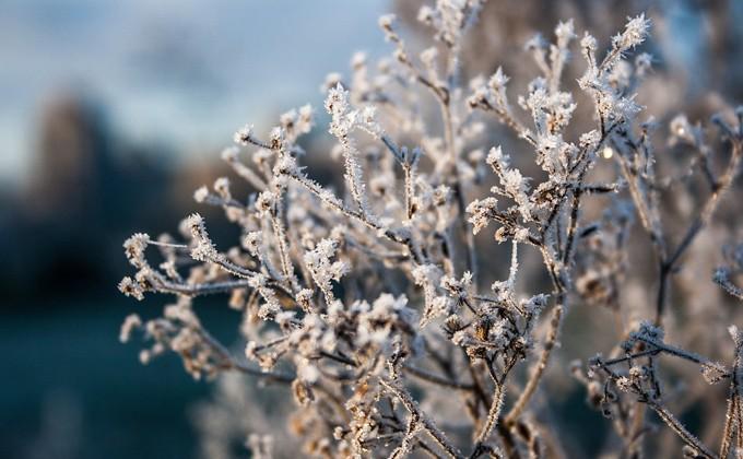 ВНовосибирск иобласть нанеделе придет похолодание до