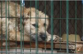 «Хорошие руки» или смертельная инъекция: выселяют приют для животных
