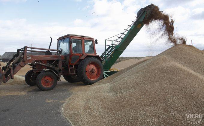 Рекордный урожай зерна вНовосибирской области привёл кпроблемам