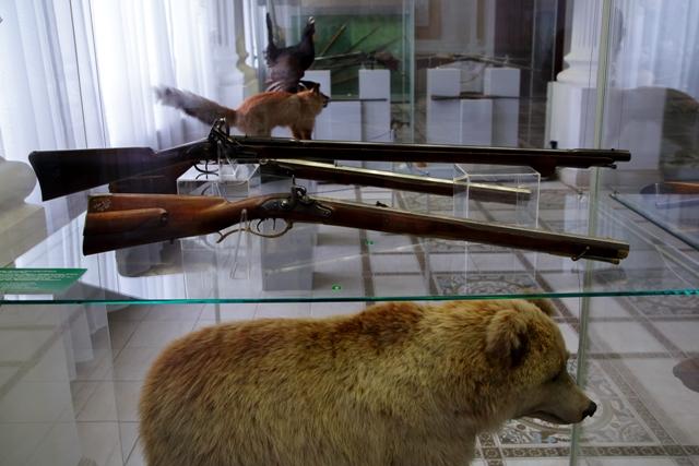 Голодные медведи нападают на новосибирских велосипедистов