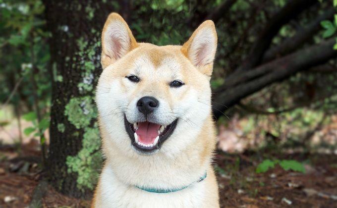Пёс Рыжик несколько недель ожидает хозяев наостановке транспорта вНовосибирске