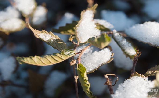 Синоптики ожидают снег вНовосибирской области навыходных