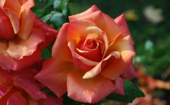 Ребенок вНовосибирске похитил букет цветов для собственной девушки