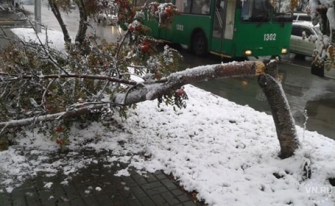 Под весом мокрого снега деревья падают наавтомобиле новосибирцев