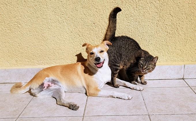 Кошка и собачка должника выдали владельца судейским приставам вНовосибирской области