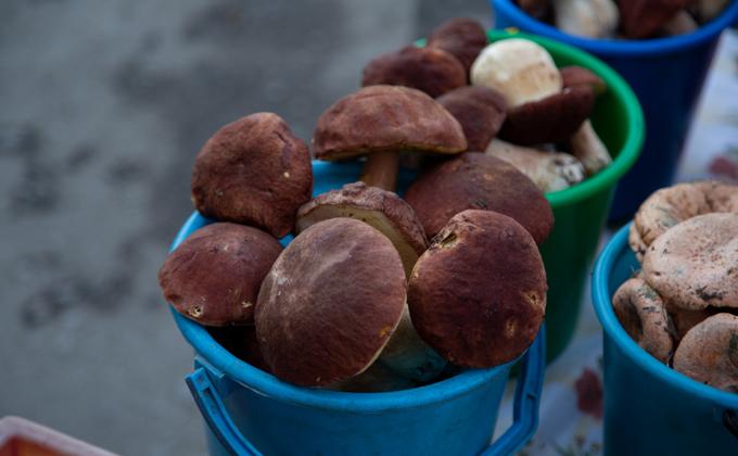Сбор диких ягод и грибов предложил регулировать Минсельхоз