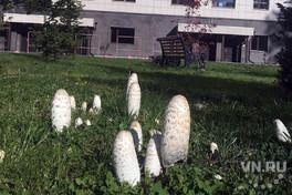 Необычные грибы появились около НГУ в Новосибирске