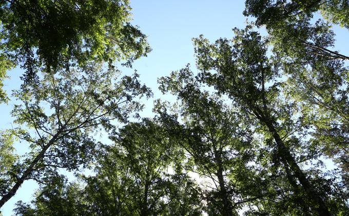 Свалки в Барабинске и Чанах хотят превратить в зеленые зоны