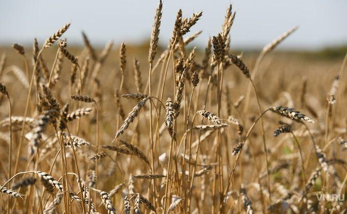 ИзНовосибирска наэкспорт оправлено неменее 20 тыс. тонн зерна