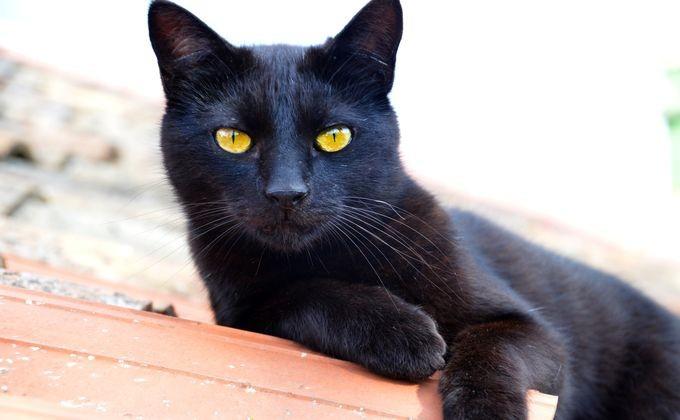 Кот с чудными способностями продан забаснословные деньги