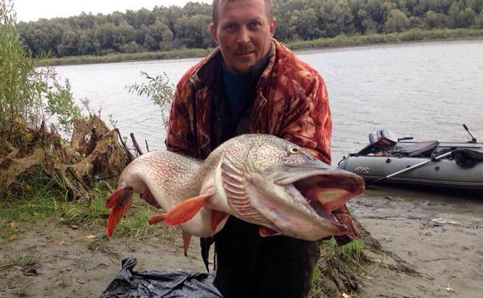 Как ловить щуку сетью? Щуку запрещают ловить рыбакам 16 просмотров Осенью