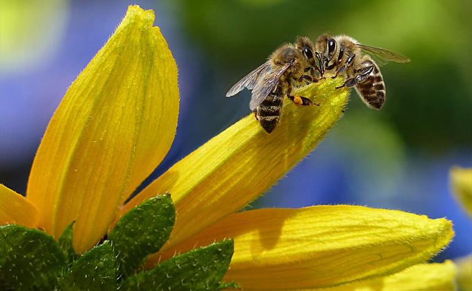 Почему гибнут пчелы в Искитимском районе