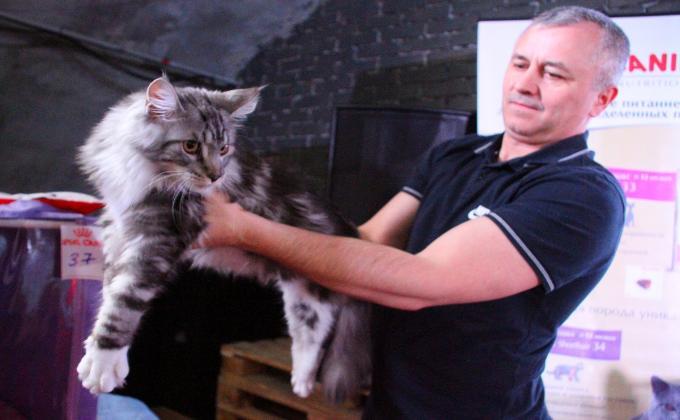 Самые милые котики Новосибирска на выставке 8 марта