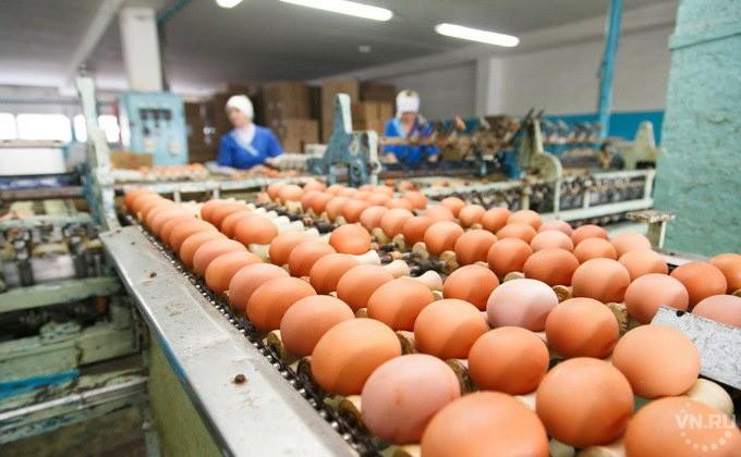 Новосибирская область увеличила экспорт зерна, яйца ипуха на24% — Россельхознадзор
