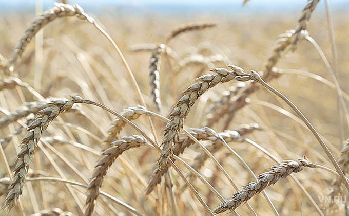 Новосибирским аграриям дадут напосевную практически 2 млрд. руб.
