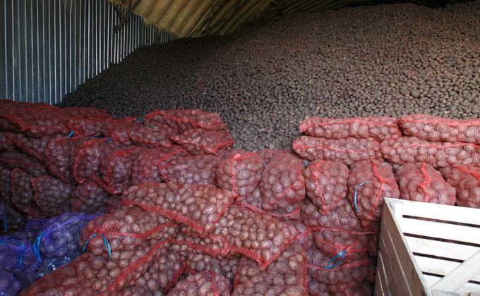 Нелегально вывезти 140 тонн картошки помог инспектор Россельхознадзора
