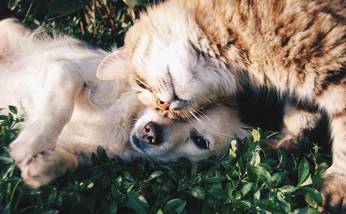 Быстрый поиск пропавших котов и собак создал Яндекс