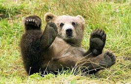 Десятки медведей вплотную подобрались к Новосибирску