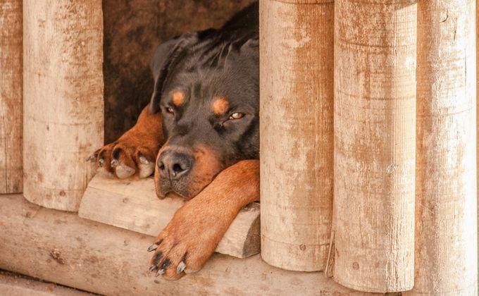 Гражданин Новосибирской области избил родственника иотдал насъедение собаке