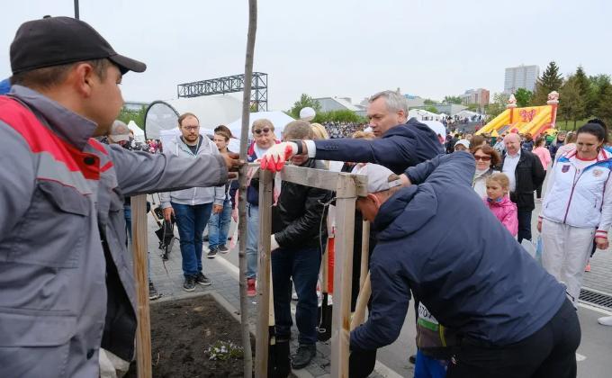 Черемуху высадили на Михайловской набережной