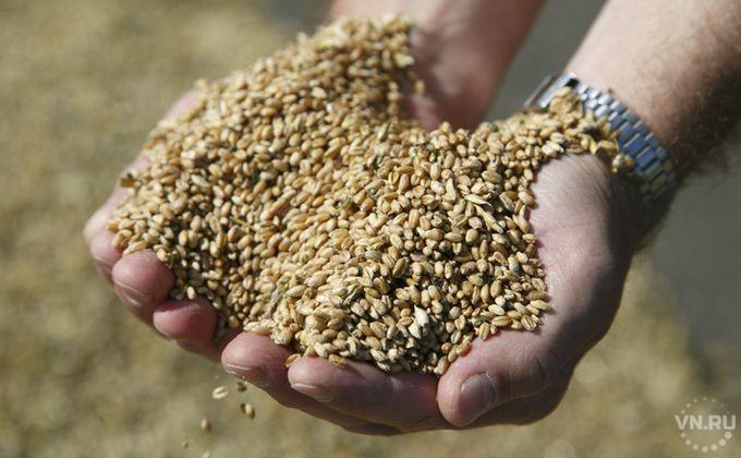 Новосибирская область собрала 1-ый млн. тонн зерна
