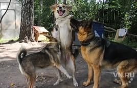 Преданные нам, преданные нами - больница для бездомных собак