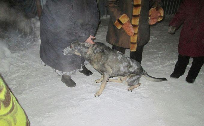 Изглубокого новосибирского оврага вытянули слепую собаку