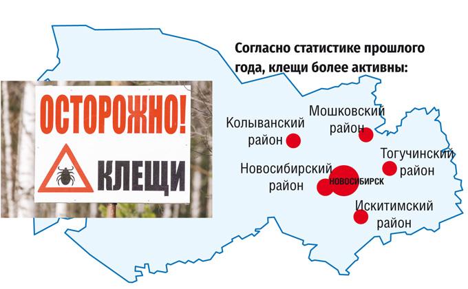 Карта районов, где клещи чаще кусают новосибирцев