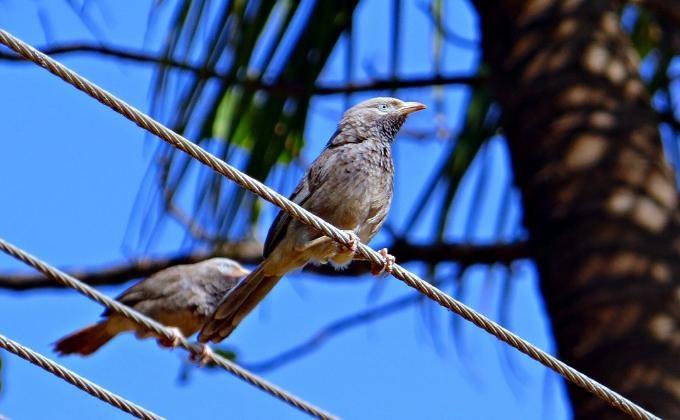 Экзотических птиц задержали натаможне в«Толмачево»