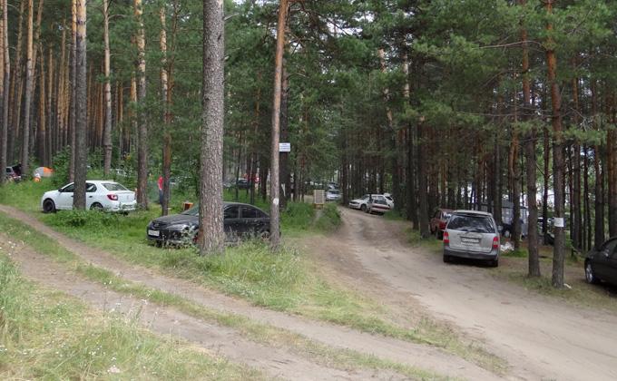 «Тают, как шагреневая кожа»: как спасти городские леса Новосибирска