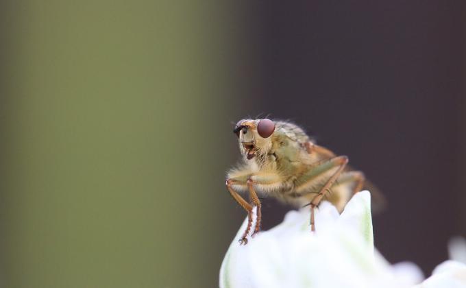 Космические мухи позволили ученымСО РАН совершить открытие