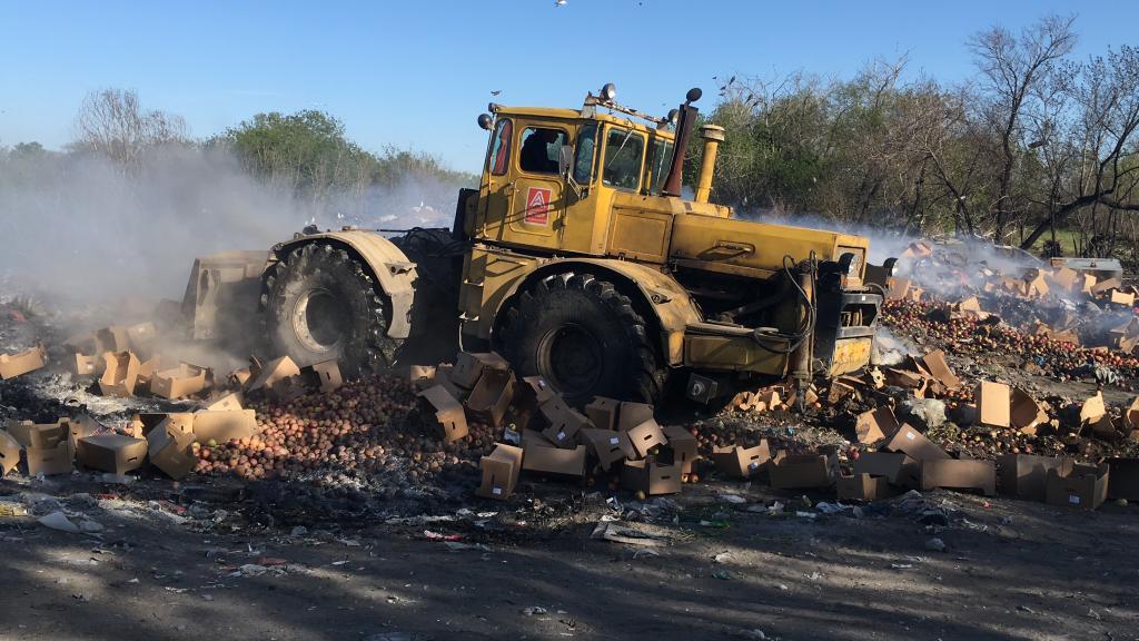 Польские яблоки раздавили трактором в Карасуке
