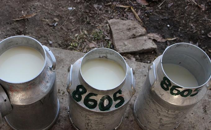 Семь бутылок молока из ста в магазинах – подделка