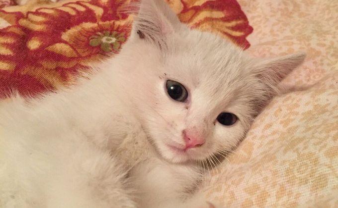 Новосибирские диггеры сняли трогательный ролик оспасении котёнка из-под земли