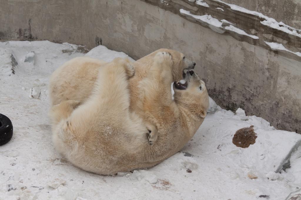 Порции корма увеличили питомцам новосибирского зоопарка вморозы