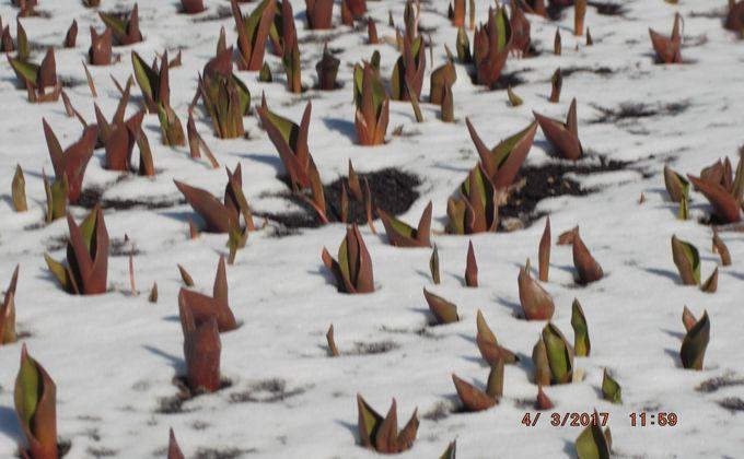 Махачкалу весной илетом будут украшать неменее одного млн. цветов